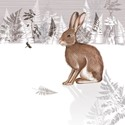 RSPB Nature Trail Card - Hare