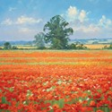 Quayside Gallery Card Collection - Poppy Fields