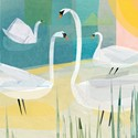Quayside Gallery Card Collection - Swans