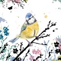RSPB Field & Forest Card - Blue Tit