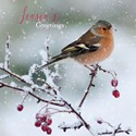 RSPB Small Square Christmas Card Pack - Frosty Perch