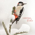 RSPB Small Square Christmas Card Pack - Winter Woodpecker